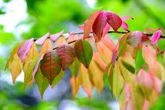 Ljus vårtillväxt i Wisconsin, USA Fotografering för Bildbyråer