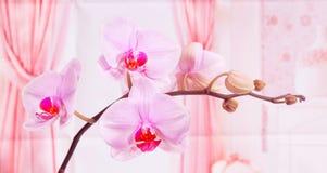 Ljus-violett orkidé royaltyfria bilder