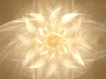ljus white för blomning Royaltyfria Foton