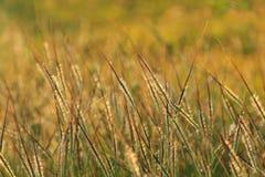ljus wild grässolnedgång Royaltyfria Bilder