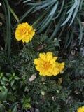 ljus yellow Royaltyfria Bilder