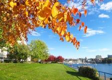Ljusa Autumn Leaves av orange och gula och blåa himlar nära den False Creek öppningen royaltyfria foton
