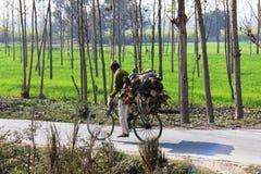 ljusa bärande soliga skogshuggareträn för dag Royaltyfria Bilder