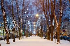 Ljusa belysningar på träd arkivfoton