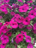 Ljusa blom fotografering för bildbyråer