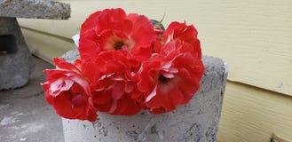 ljusa blommor Fotografering för Bildbyråer