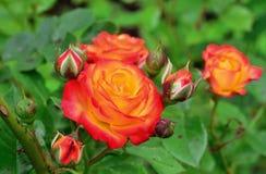 Ljusa blommor för sommar solig dag Royaltyfria Bilder