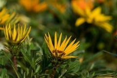 Ljusa blommor som blommar i trädgård med grönt gräs arkivbild