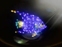 Ljusa brusandeblått fiskar i det mörka havet under ovanför solljus Royaltyfria Foton