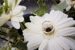 ljusa cirklar för bakgrund som gifta sig white Arkivfoto