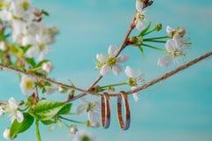 ljusa cirklar för bakgrund som gifta sig white Vår som bakgrund är, kan filialen använd blomning Royaltyfria Foton
