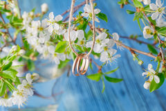 ljusa cirklar för bakgrund som gifta sig white Vår som bakgrund är, kan filialen använd blomning Royaltyfri Fotografi