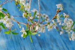 ljusa cirklar för bakgrund som gifta sig white Vår som bakgrund är, kan filialen använd blomning Arkivfoton