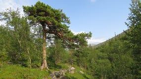 ljusa declivitieskullar landscape overhand överkanttyp för berg Royaltyfria Bilder