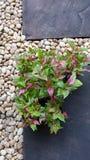 Ljusa dekorativa växter Royaltyfri Foto
