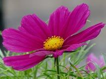 ljusa färger Royaltyfria Bilder