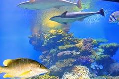 Ljusa färger av koraller Eilat israel arkivfoton