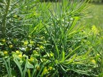 Ljusa färger för grönt gräs Arkivfoton