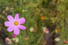 Ljusa färgrika blommor i trädgård Arkivfoto