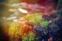 Ljusa färgrika solstrålar över en sten som täckas med mossa eller laven i skogen Arkivbild