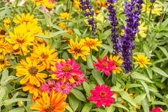 ljusa färgrika trädgårdväxter i sommar i washington arkivfoto