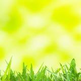 Ljusa fläckar för grön och gul abstarct Royaltyfri Bild