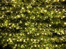 Ljusa garneringar för ris på buskebakgrund arkivbild
