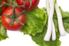 ljusa grönsaker Royaltyfri Bild