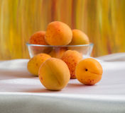 Ljusa gula och orange auricos på en vit bordduk Royaltyfri Foto
