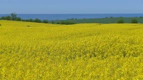 ljusa kontrast för rapeseedfjäder för fält gröna trees yellow Arkivfoton