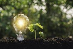 Ljusa kulor med gl?dande teknologi- och kreativitetbegrepp med ljusa kulor och kopieringsutrymme f?r mellanl?ggstext royaltyfri fotografi