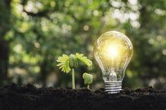 Ljusa kulor med gl?dande teknologi- och kreativitetbegrepp med ljusa kulor och kopieringsutrymme f?r mellanl?ggstext fotografering för bildbyråer