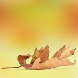 ljusa leaves för abstrakt höstbakgrund Arkivfoto