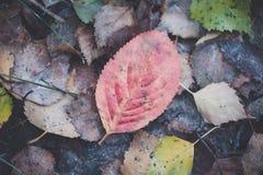 ljusa leaves för höst Höst arkivfoto