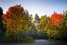 ljusa morgontrees för höst fotografering för bildbyråer