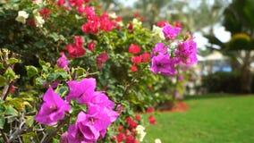 Ljusa och härliga blommor 4K arkivfilmer