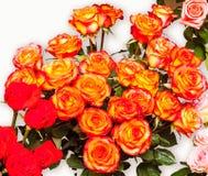 Ljusa orange rosor på en ljus bakgrund Royaltyfri Bild