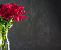 Ljusa röda pionblommor Royaltyfri Fotografi
