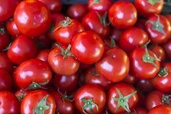 Ljusa röda tomater på stånd Arkivbild