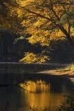 Ljusa reflexioner av nedgånglövverk på mörkt vatten, Mansfield, lurar Fotografering för Bildbyråer