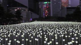 Ljusa Rose Garden i Hong Kong arkivfilmer