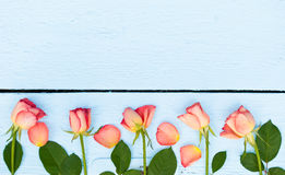 Ljusa rosor på blå wood bakgrund Royaltyfri Fotografi