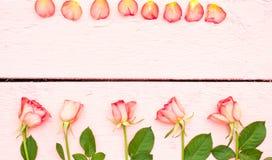 Ljusa rosor på rosa wood bakgrund Royaltyfri Bild