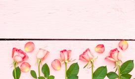 Ljusa rosor på rosa wood bakgrund Arkivbilder