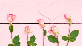Ljusa rosor på rosa wood bakgrund Arkivbild