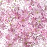 Ljusa Sakura Pattern Royaltyfria Foton