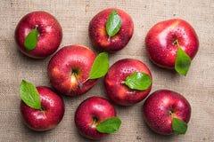 Ljusa skinande våta röda äpplen med gröna sidor och vattendroppar på Arkivbilder