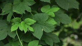 Ljusa skoggräsplaner i skogbakgrunden med ovanlig växtlövverk lager videofilmer