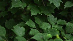 Ljusa skoggräsplaner i skogbakgrunden med ovanlig växtlövverk arkivfilmer