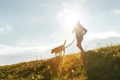 Ljusa soliga morgonCanicross övningar Mankörningar med hans beaglehund royaltyfri fotografi